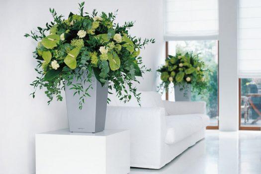 Cum ingrijim plantele decorative din apartament?